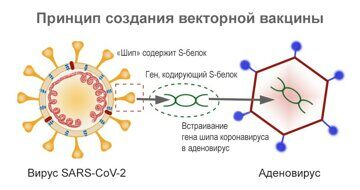коронавирус и аденовирус